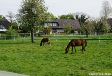 FLOATING-Rehin_Umgebung6_Pferd